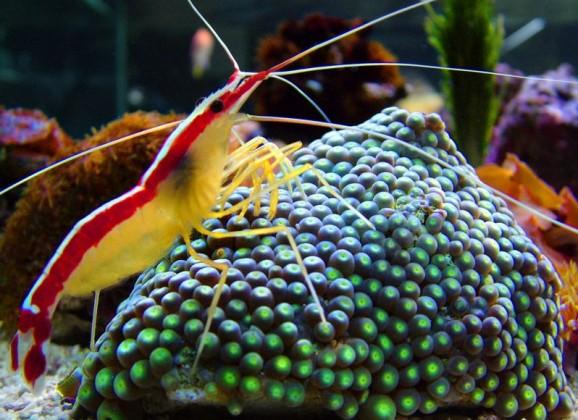 Anemone, Sea Urchins